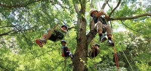 木登り遊び、森林